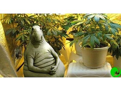 """""""Встряска"""" просто необходима: введите марихуану в стресс, и она поразит вас своей продуктивностью!"""