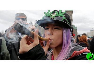 Высокие дозы марихуаны – не всегда хорошо! Употребляйте каннабис правильно