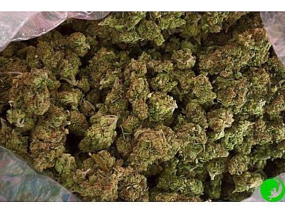 ТОП-6 советов, которые пригодятся при выращивании вкуснейших шишек марихуаны