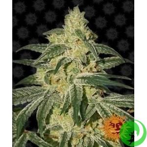 Семена конопли Afghan Hash Plant by Barney`s Farm