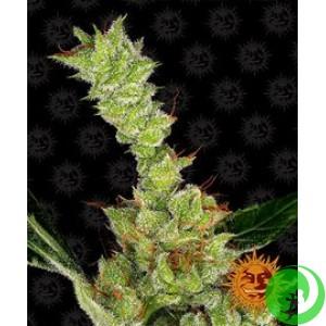 Семена конопли Dr. Grinspoon by Barney`s Farm
