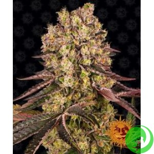 Семена конопли Runtz Muffin  by Barney`s Farm