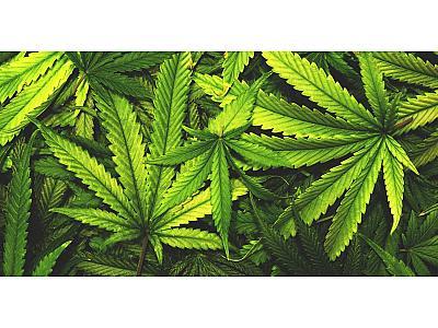В Амстердаме хотят запретить продажу марихуаны туристам