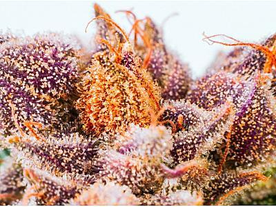 Что делает каннабис фиолетовым?