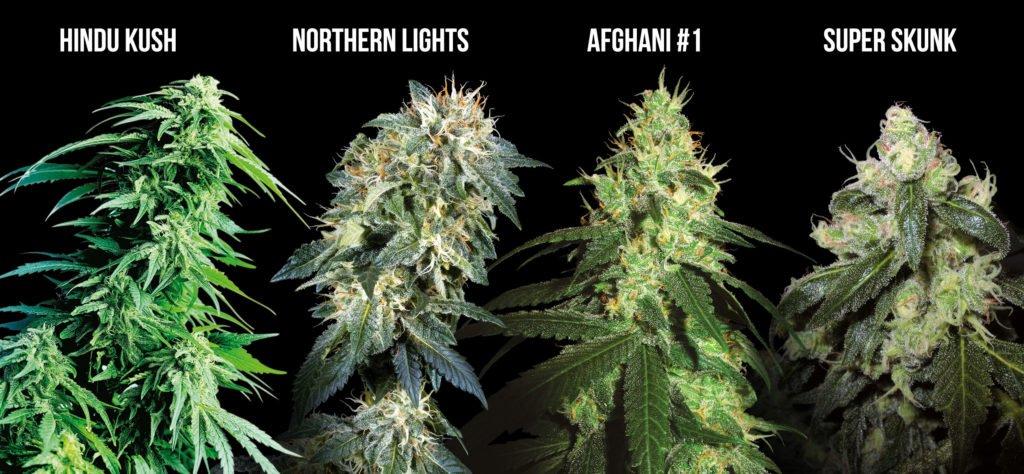 Марихуана посадка и уход в марихуана в сша цена