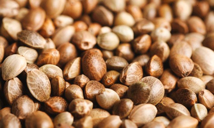Что нужно для семя канабиса отравление конопля