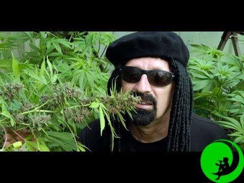 Выращивание конопли высший пилотаж марихуана армия