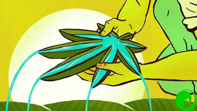 Медитация и марихуана журнал о марихуане