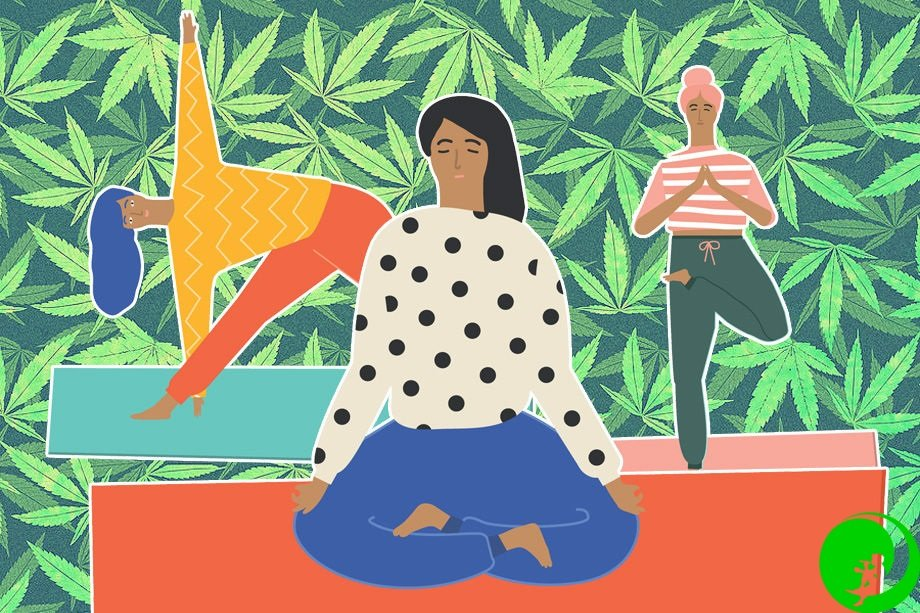 Марихуана в медитации семена конопли индиго